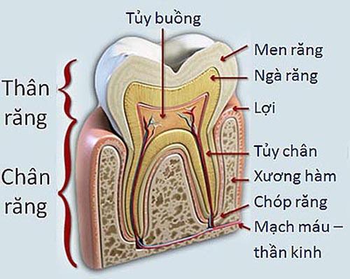 Răng là gì?